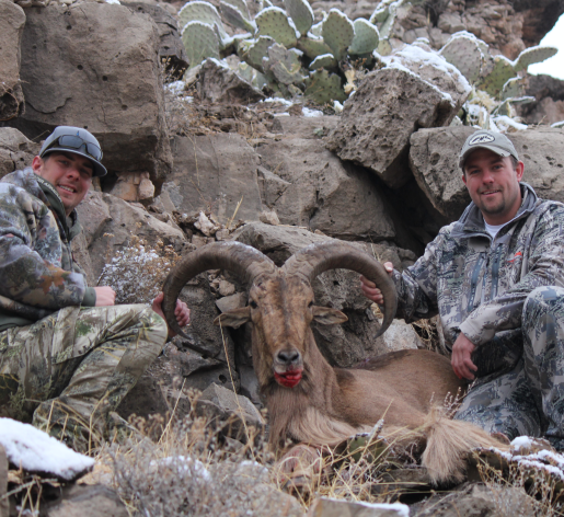 <h1>SFGC ProGuides that know Barbary sheep habits and how to get close</h1>